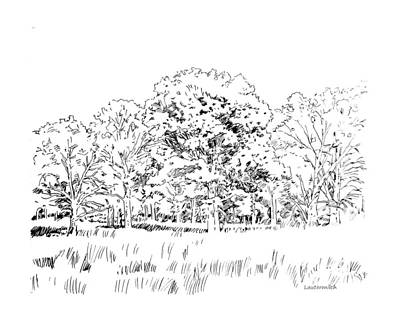 Grove Of Oak Trees Poster