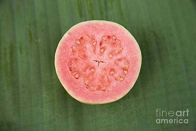 Guava Fruit Half Poster by Inga Spence