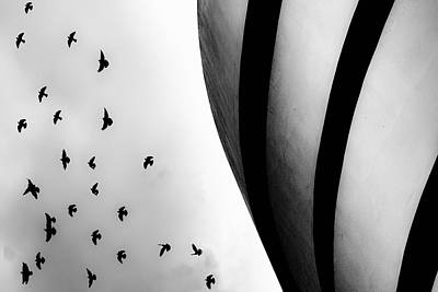 Poster featuring the photograph Guggenheim Museum With Pigeons by Dave Beckerman
