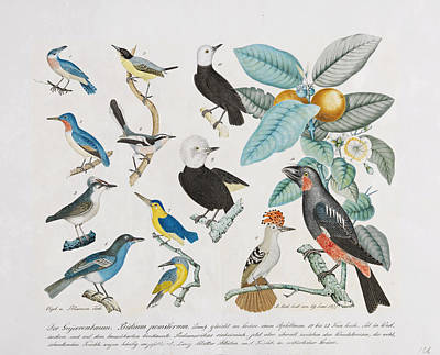 Gujava Tree. Birds And Plants Poster