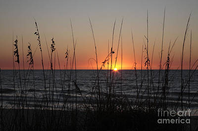 Gulf Sunset In Florida Poster