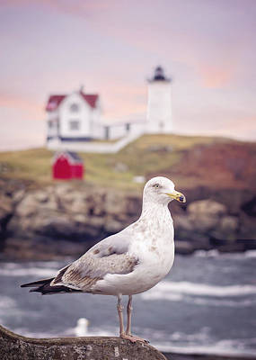Gull At Nubble Poster