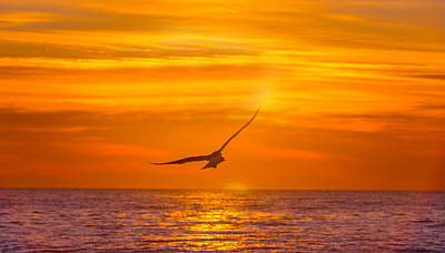 Gull At Sunrise Poster by Allan Levin