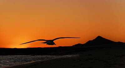 Gull At Sunset Poster by Dave Dilli