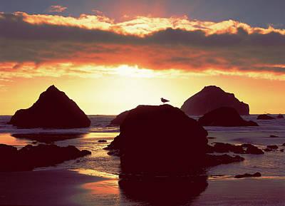 Gull On Rock Bandon Beach Sunset Poster