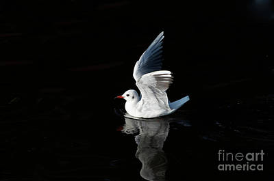 Gull On The Water Poster by Michal Boubin