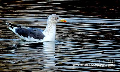 Gull On Winter's Pond  Poster
