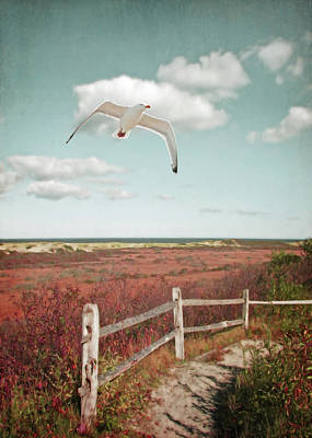 Gull Over Provincelands Trail, Cape Cod Poster by Brooke T Ryan