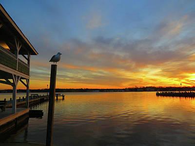 Gull Sunset Poster