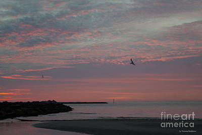 Gull Sunset Poster by Tannis Baldwin
