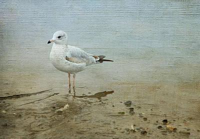 Gull Poster by Theresa Tahara