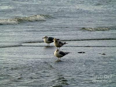 Gulls At A Seattle Beach Poster