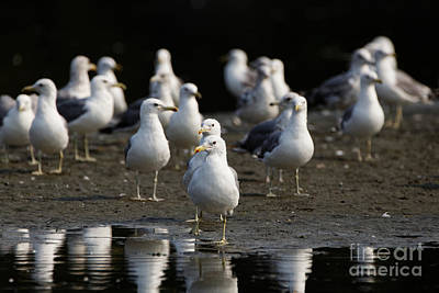 Gulls At The Beach Poster