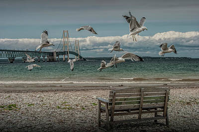 Gulls Flying By The Mackinac Bridge At The Straits With Park Bench Poster