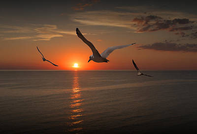 Gulls Flying Towards The Sun Poster by Randall Nyhof