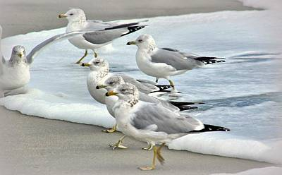 Gulls In The Surf Poster