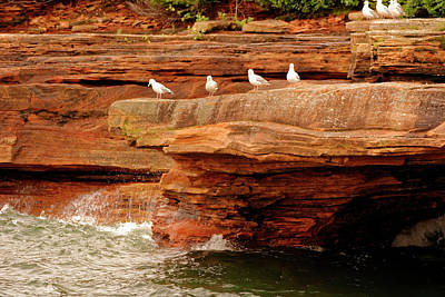 Gulls On Outcropping Poster