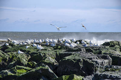 Gulls On Rock Jetty Poster