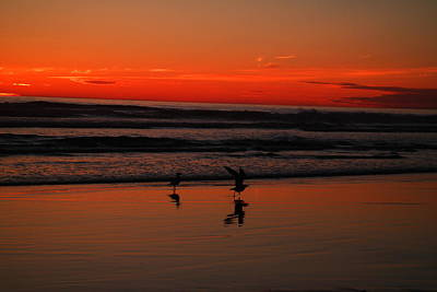 Gulls On The Beach At Sundown Poster