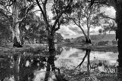 Poster featuring the photograph Gum Creek by Douglas Barnard