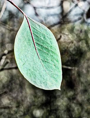 Gum Leaf - Australia  Poster