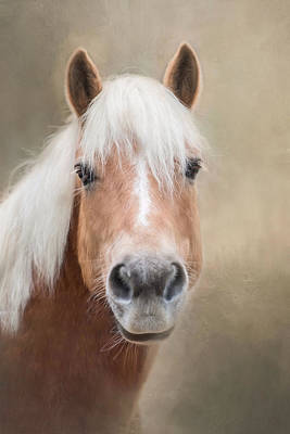Poster featuring the photograph Haflinger by Robin-Lee Vieira