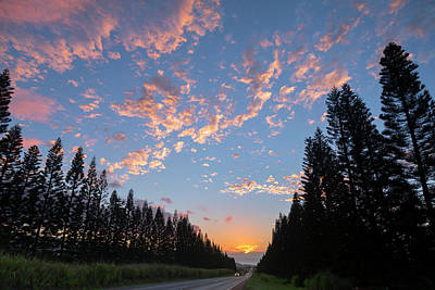 Haleiwa Pines Poster