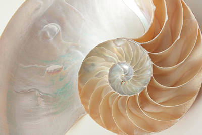 Poster featuring the photograph Half  Shell Nautilus by John Hix