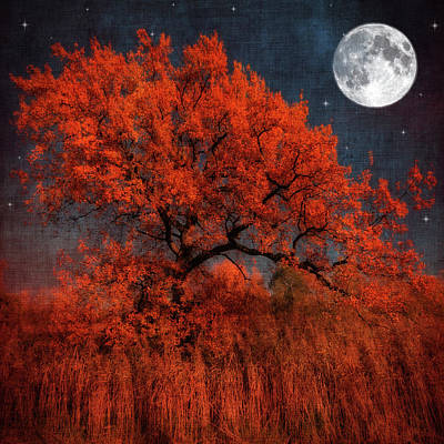 Halloween Color Poster by Philippe Sainte-Laudy Photography