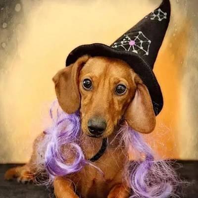 #halloween #happyhalloween Poster