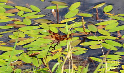 Halloween Pennant Dragonfly At Pond Poster