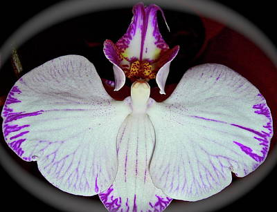 Poster featuring the photograph Halo Orchid by Randy Rosenberger