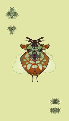 Hammerhead Ladybug Specimen Poster