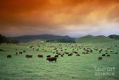 Hana Ranch Pasture Poster by Ron Dahlquist - Printscapes