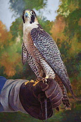 Poster featuring the photograph Hand Of The Falconer by Nikolyn McDonald