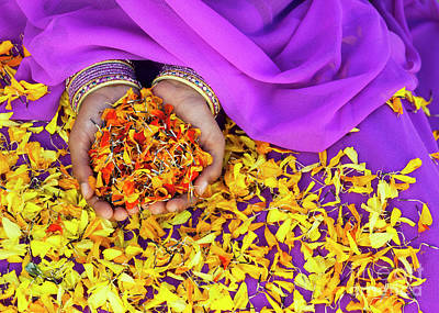 Hands Holding Marigold Petals Poster