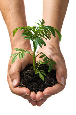 Hands Holding Seedling Planted In Soil Poster