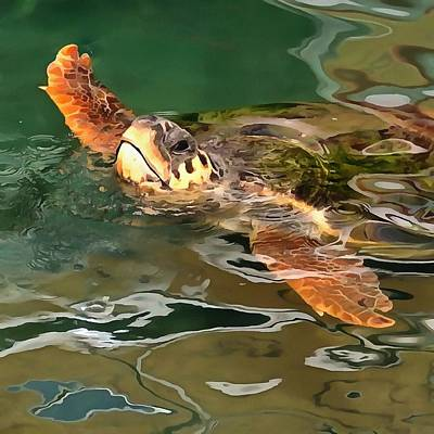 Hands Up For A Plastic Free Ocean Loggerhead Turtle Poster