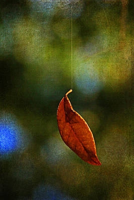 Hanging By A Thread Poster by HH Photography of Florida