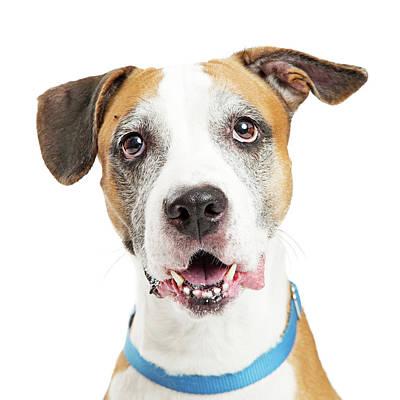 Happy Crossbreed Big Dog Closeup Poster