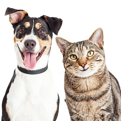 Happy Dog And Cat Together Closeup Poster