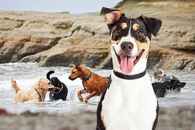 Happy Dog Having Fun At Dog Beach Poster