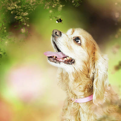 Happy Dog Outdoors Looking At Bee Poster