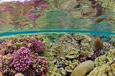 Hard Coral Carpets A Shallow Seafloor Poster
