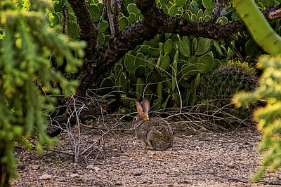 Poster featuring the photograph Hare Habitat H22 by Mark Myhaver