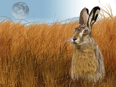 Hare In Grasslands Poster
