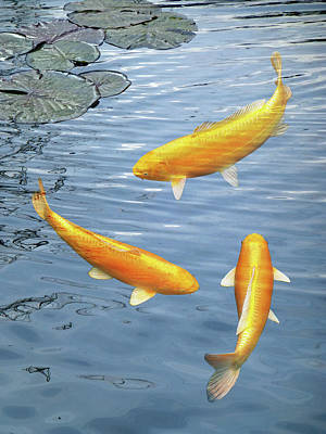 Poster featuring the photograph Harmony - Golden Koi by Gill Billington