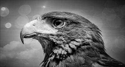 Harris Hawk  Black And White Poster
