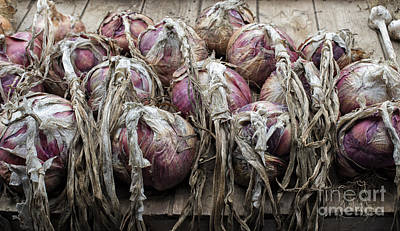 Harvested Onions Red Winter Poster by Tim Gainey