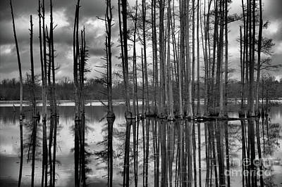 Hatchie National Wildlife Refuge Reflections Poster by James Larkin